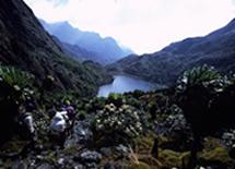 Rwenzori Mountain Gorilla Hiking