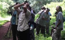 View Our safaris in Rwanda