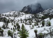 Mt.Rwenzori Hiking Tour