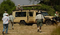 View Our safaris in Rwanda