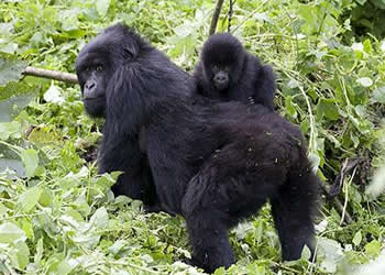 Bwindi forest national park