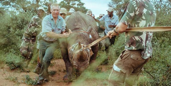 Rwanda Re-introduces Black Rhinos