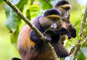 Mgahinga gorilla national p[ark