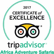 tripadvisor africa adventure safaris