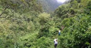 nature walks Bwindi forest
