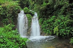 Forest walks In Bwindi
