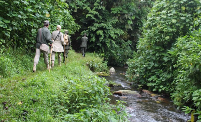 Nature Walks in Mgahinga Gorilla National Park