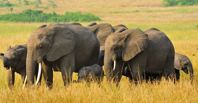 Wildlife & Beauty  Key to Uganda's Tourism Sector