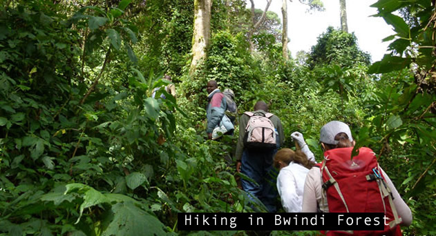 Gorilla tours in Bwindi Forest National park