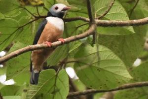 Birding watching in Semuliki