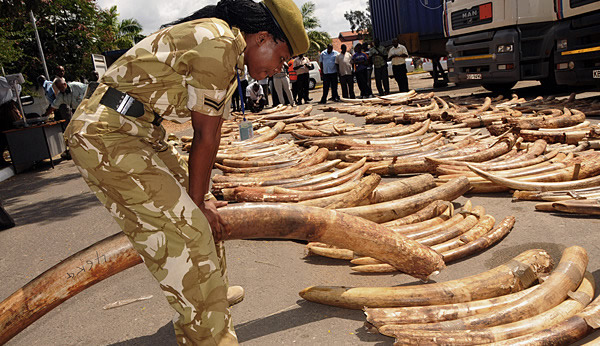 Uganda Strengthens Fight Against Poaching