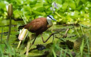 Where to go fro birding in Uganda