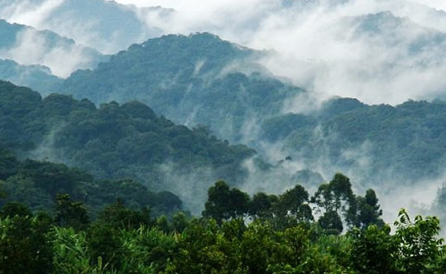 sectors in bwindi forest NP