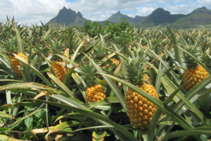 Uganda to promote Agri-tourism