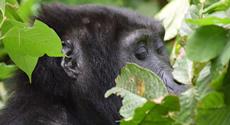 Rwanda goilla tours