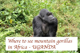 Where to see gorillas