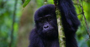 Gorilla tour destinations