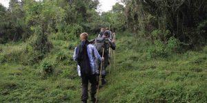 Bwindi Forest Walks