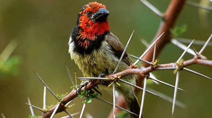 New Bird Species Discovered in Uganda