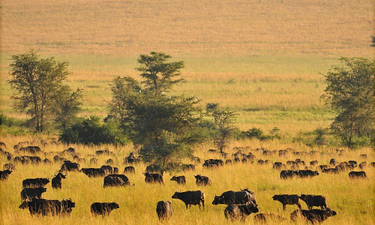 Uganda's least Visited National Parks