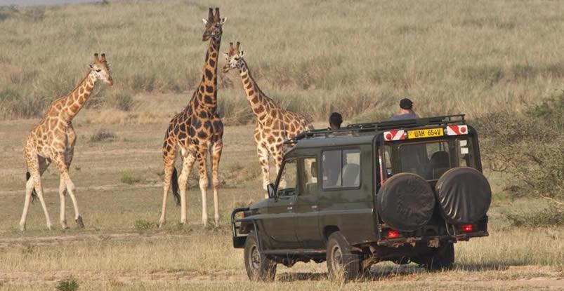 Game Safaris in Rwanda