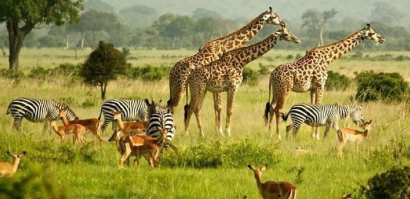Uganda Re Opens Savannah Parks For Tourism