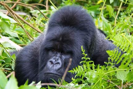 2-days-rwanda-gorilla-trek